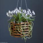 Best way to grow Vanda orchids