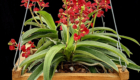 premium potting mix for orchids