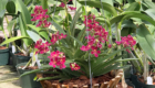 rot resistant wood orchid basket