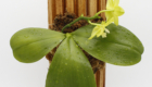 Most natural way to mount orchids